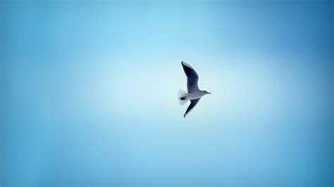 beautiful bird flying in sky hd wallpapers 1080p