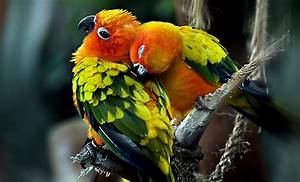 Best Pics Store  Top 20 Cute Birds Hd Wallpapers For Pc