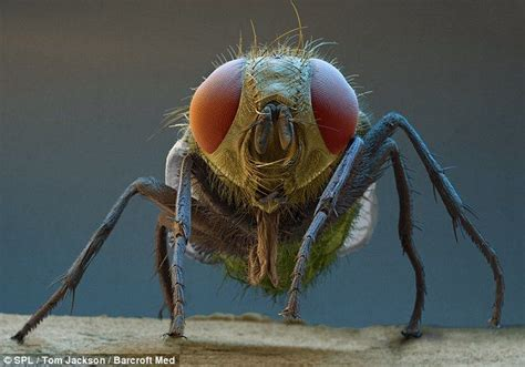 incredible photographs  micro monsters page