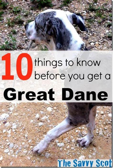 great dane  great danes pets quotes great dane