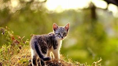 Kitten Adorable Cat Desktop 1920 1080
