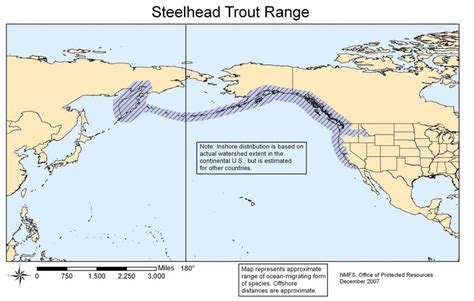 steelhead trout range rainbow native map fishing form global common anadromous mykiss wiki know things wikipedia everipedia facts
