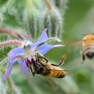 bienenweide bienenfreundliche bluhmischung fur balkon und With whirlpool garten mit bienenfreundliche pflanzen für balkon und garten