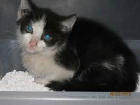 catwalk katzen auf abwegen vermisst zugelaufen