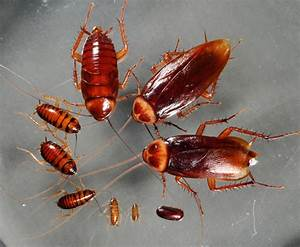 Cockroaches — ExCimex