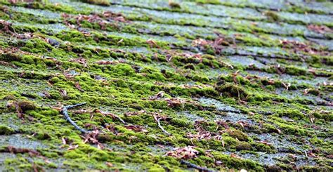 Ask Wet & Forget Homeowners Beware! Roof Moss Can Spell