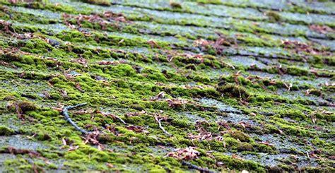 Lichen Roof & Is