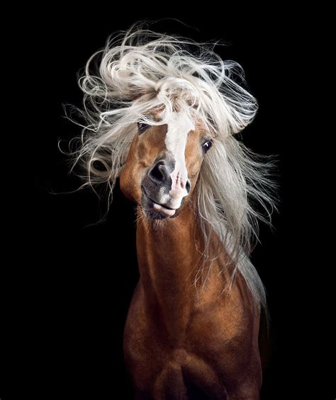 12096 professional photographs of animals instead of getting a boring office i followed my