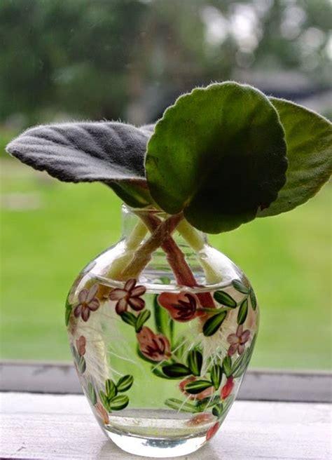 houseplants   grow  water