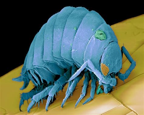micro monsters scanning electron microscope images