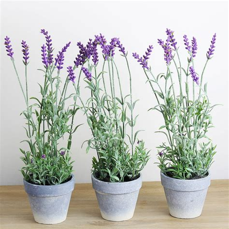 lavender potted plants artificial lavender plant in pot by marquis dawe notonthehighstreet com