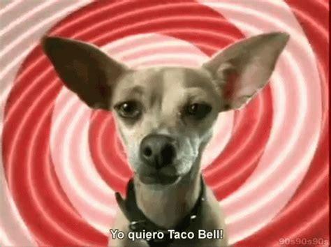 taco bell gif tacobell yoquiero dog discover share gifs