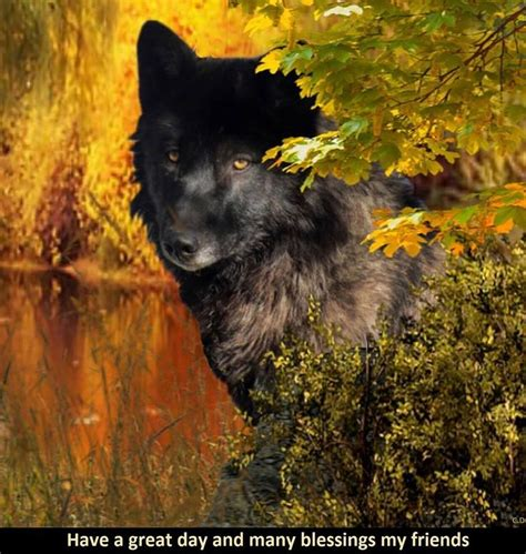 wolves images  pinterest animals wolves art