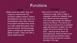 Reproductive System Olivia Johnson