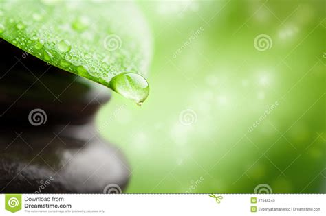 green background spa leaf  water drop stock image