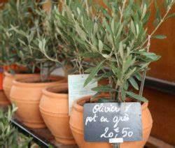 Olivenbaum Pflege Im Topf : olivenbaum berwintern standort pflege tipps plantura ~ Buech-reservation.com Haus und Dekorationen