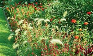 graser pflanzen pflanzen saen pikieren selbstde With französischer balkon mit gräser garten anlegen