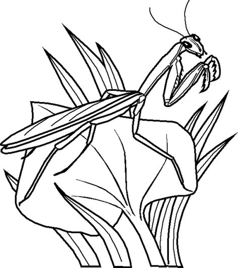 insect coloring pages  az coloring pages