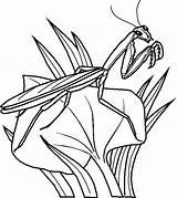Coloring Bugs Pages Bunny Bug Printable Insects sketch template