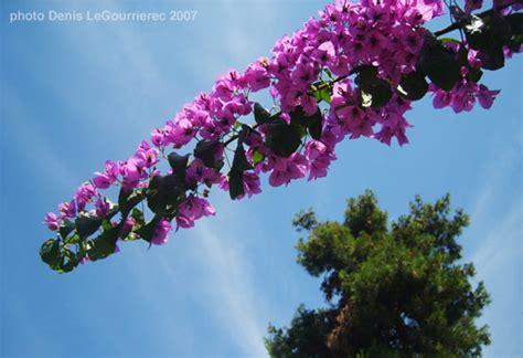 croatian flowers croatian flowers