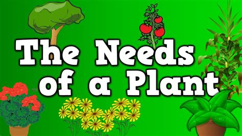 the needs of a plant song for about 5 things plants