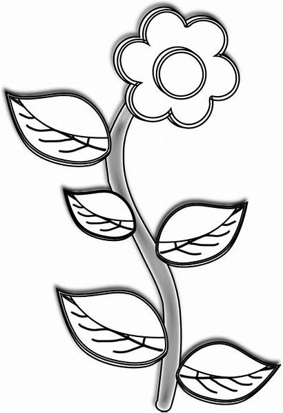 Clipart Flower Simple Plant Drawing Easy Sunflower