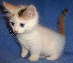 Consigli per alimentare i gattini con il biberon