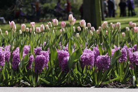 bulb planting ideas plant your spring garden this fall gt http www hgtvgardens com bulbs bulb planting ideas soc