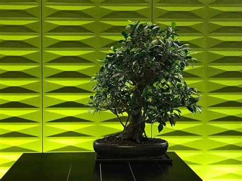 piante ufficio piante per ufficio piante da ufficio per migliorare l