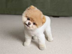 Dog Breeds In The World Small A Z Names Of Cute With ...
