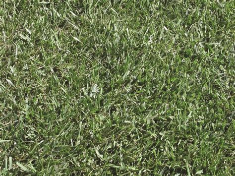 fescue grass types top 28 types of fescue tall fescue grass what you need to know about the most pin tall