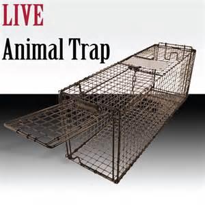 live trap cat racoon skunk possum rabbit cat live humane animal trap 31