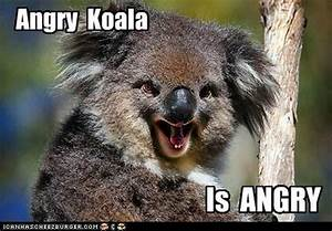 80 best images about koalas ... on Pinterest | Hey mama ...