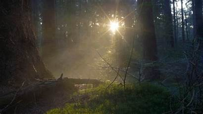 Gifs Nature Giphy 4k Sunset Smoke Forest