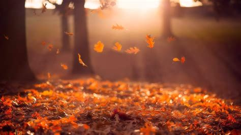 Red Leaves In The Autumn Sunrays - Nature Photography HD ...