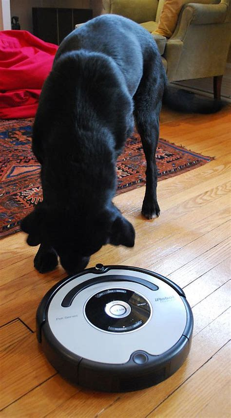 roomba pet series  paws  review cnet