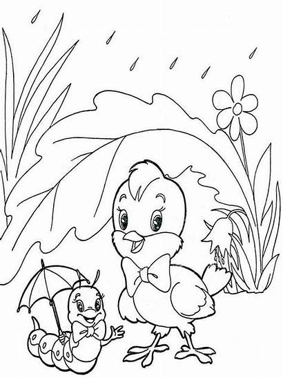 Coloring Pages Chick Chicks Summer Nature Printable