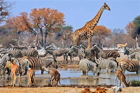 etosha experience namibia discover  world
