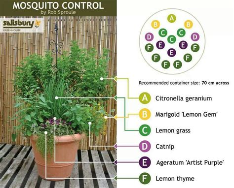 garden mosquito mosquito control container garden of carrie pinterest gardens yards and mosquito