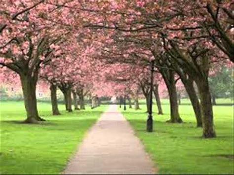 pemandangan taman bunga sakura youtube