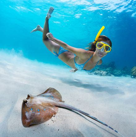 snorkeling  cancun scuba diving cancun