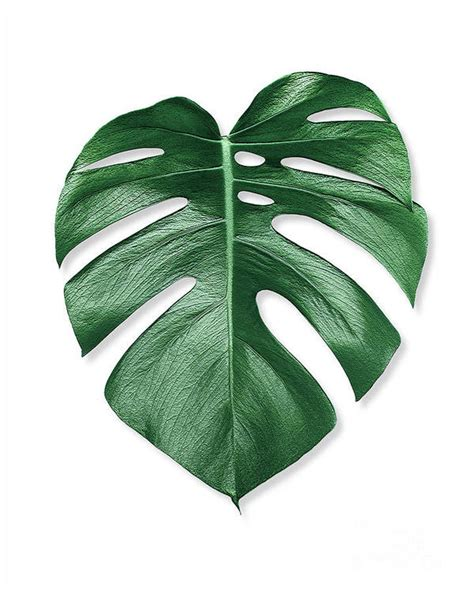 Loving this color scheme this summer! Monstera Palm Leaf Art Print by Scandinavian Walls