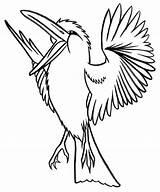 Kookaburra Coloring Colouring Animal Realistic Outline Clipart Bird Printable Cockatoo Lyrics Animals Australian Colorier Coloriage Oiseaux Crested Colour Para Template sketch template
