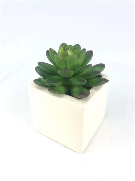 กุหลาบหินปลอม(เฉพาะหัวไม่รวมกระถาง) ไม้อวบน้ำ Succulent ...