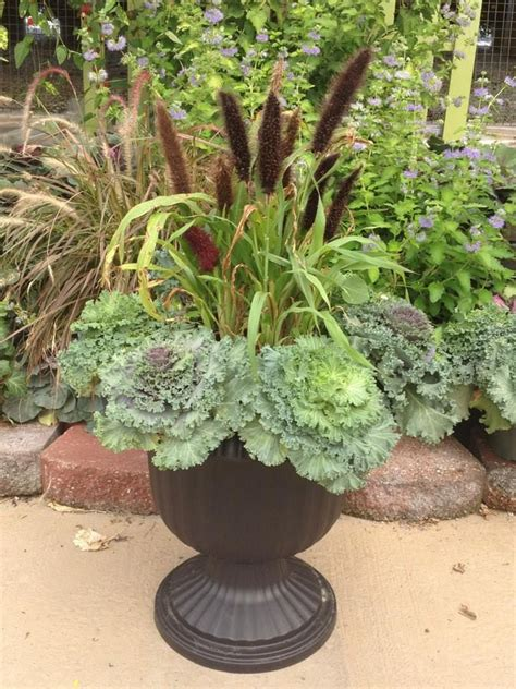 curated ornamental cabbage planter ideas  atmmama