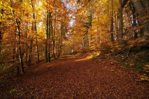 when does autumn start in 2016 autumn equinox in the uk explained metro news