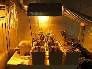 Lampen Für Pflanzen : lampen f r pflanzen schaffen sie im winter optimale bedingungen pflanzen lampen und winter ~ A.2002-acura-tl-radio.info Haus und Dekorationen