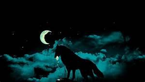 Lobo en la noche 1920x1080 :: Fondos de pantalla y wallpapers