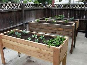 YOUR Victory Garden – How you can reduce your food budget