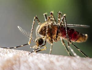 mückenstiche behandeln hausmittel was hilft gegen m 252 ckenstiche mittel hausmittel vorgestellt